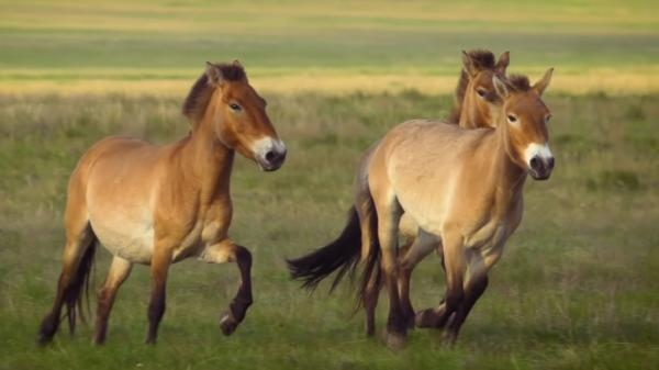 Planeta koní