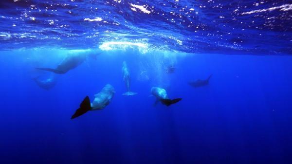 Atlantik: Rok v divočině