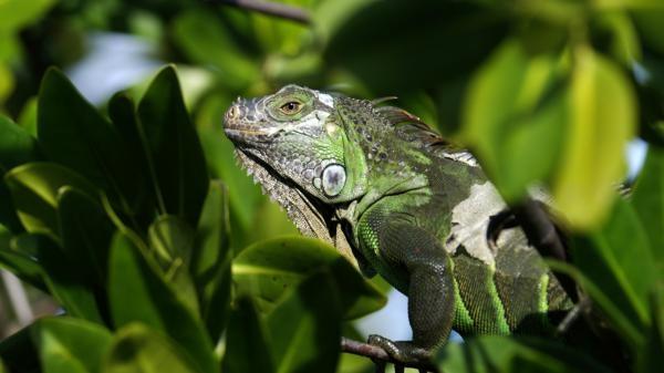 Rok v parku Everglades