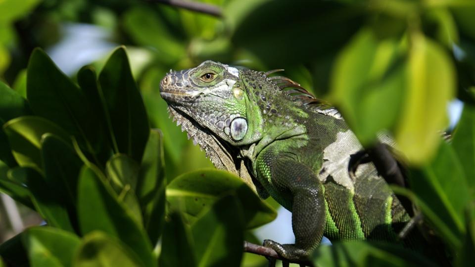 Dokument Rok v parku Everglades