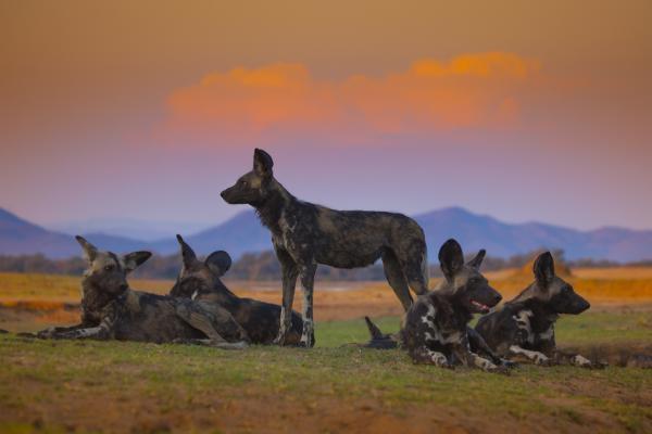 David Attenborough: Zvířecí dynastie  (4)