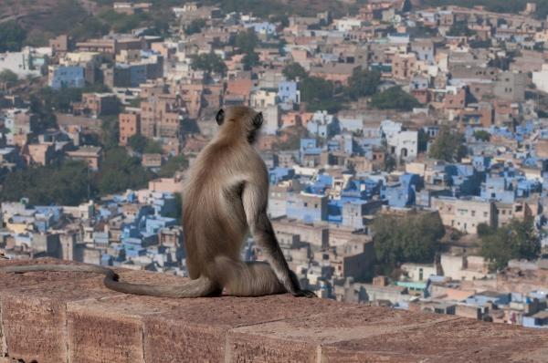 Do divočiny: Indický ráj
