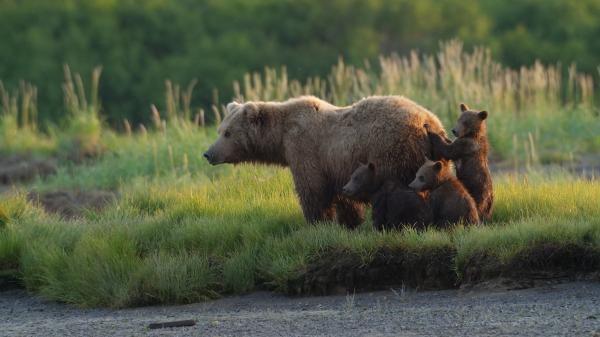 Aljaška: Rok v divočině