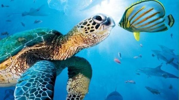 Velké podmořské dobrodružství