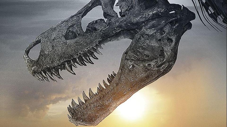 Dokument Dinosaur 13