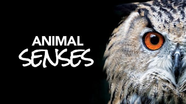 Zvířecí smysly