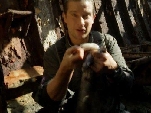 Bear Grylls: Muž vs. divočina  V (7)
