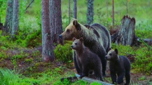 Dokument Medvedí les