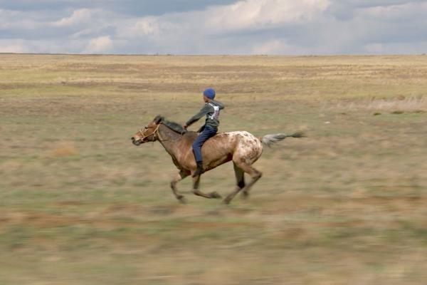 Koně velké Rusi