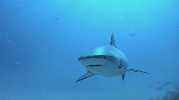 Žraločí komando