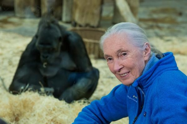 Jane Goodallová - životní příběh