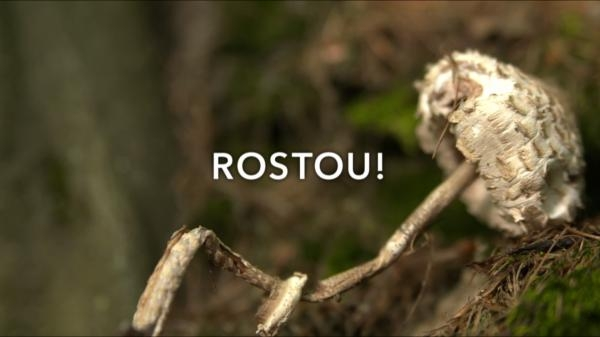 Rostou!