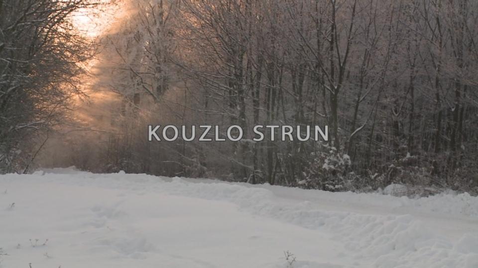 Dokument Kouzlo strun
