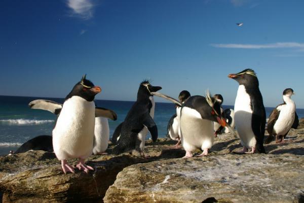 Tučňáci - život z blízka