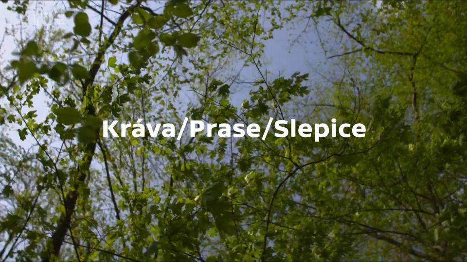 Dokument Kráva/Prase/Slepice