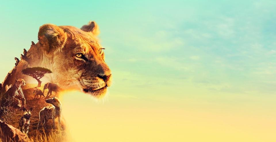 Dokumentarci Serengeti