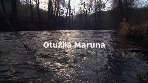 Dokument Otužilá Maruna