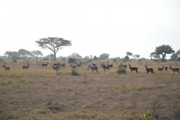 Na cestě po východní Tanzánii