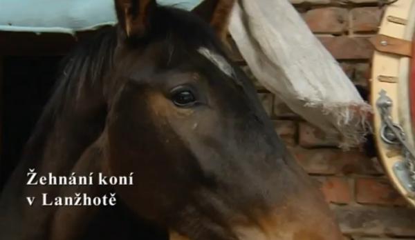 Žehnání koní v Lanžhotě