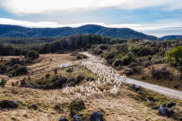 Na cestě po novozélandském Tasmanu