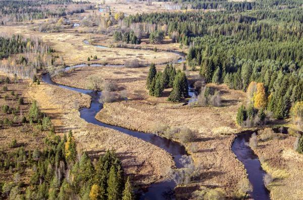 Dokument Tajemství lesního potoka