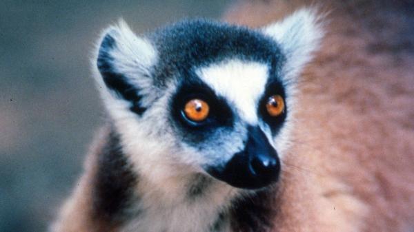 Do divočiny: Madagaskar