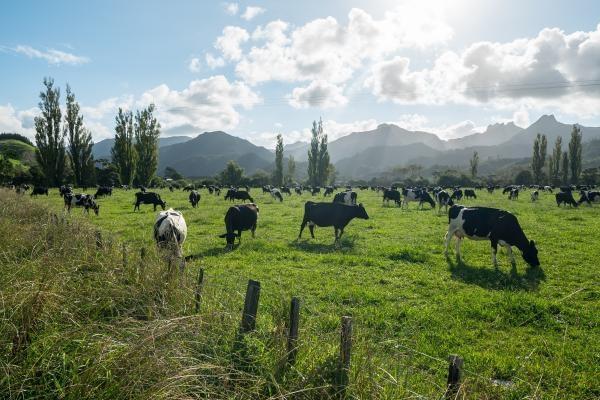 Na cestě po novozélandském Coromandelu