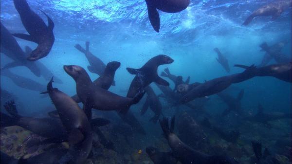 Tuleni: Cesta za přežitím