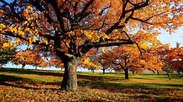 Dokument Podzim: Svět barev