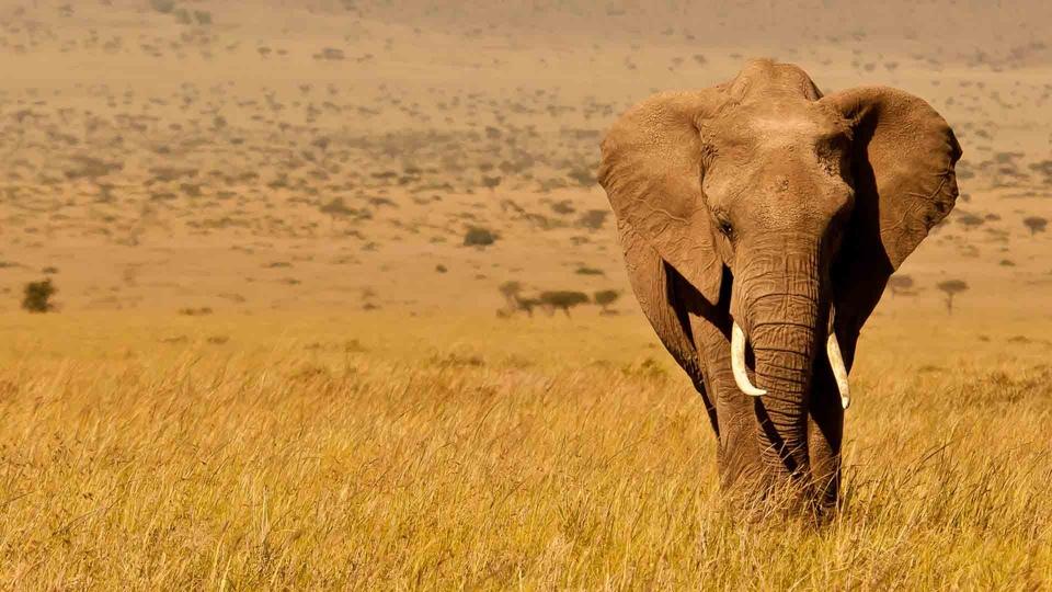 Dokument Deníky keňského života v divočině