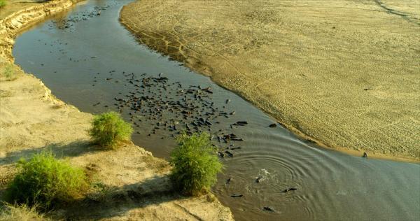 Divočina Afriky kolem řek