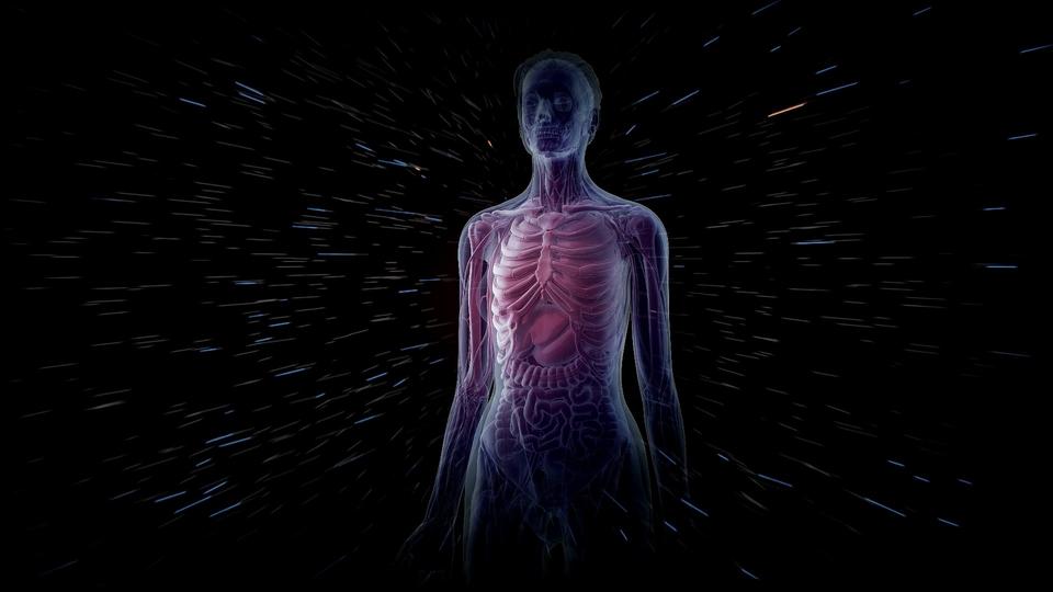 Dokument Tajemství lidského těla