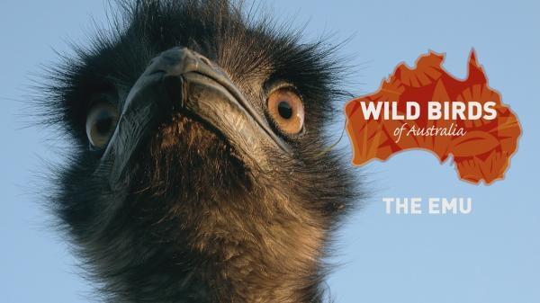 Dokument Divocí ptáci Austrálie