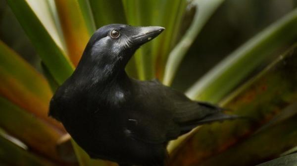 Ptačí inteligence bez hranic