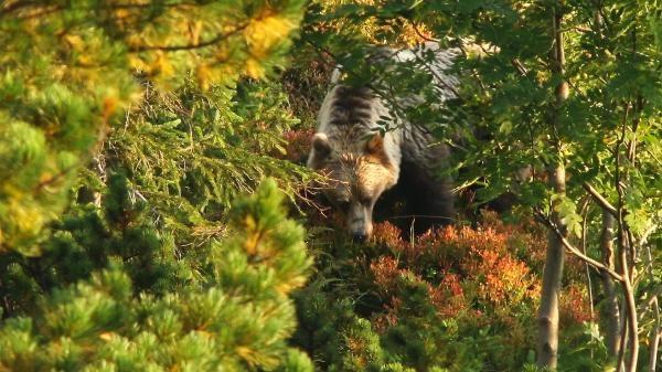 Vysoké Tatry: V srdci divočiny