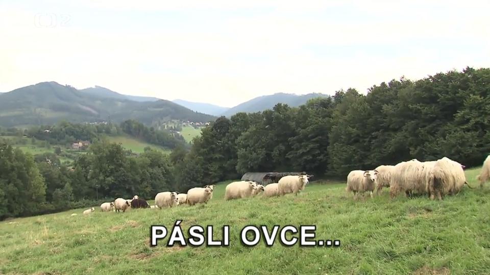 Dokument Pásli ovce...