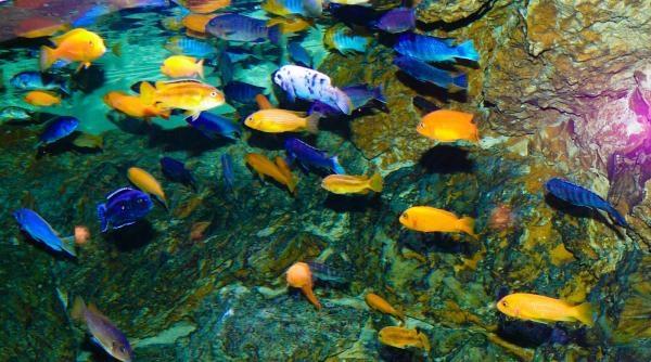Podmořské divy Afriky