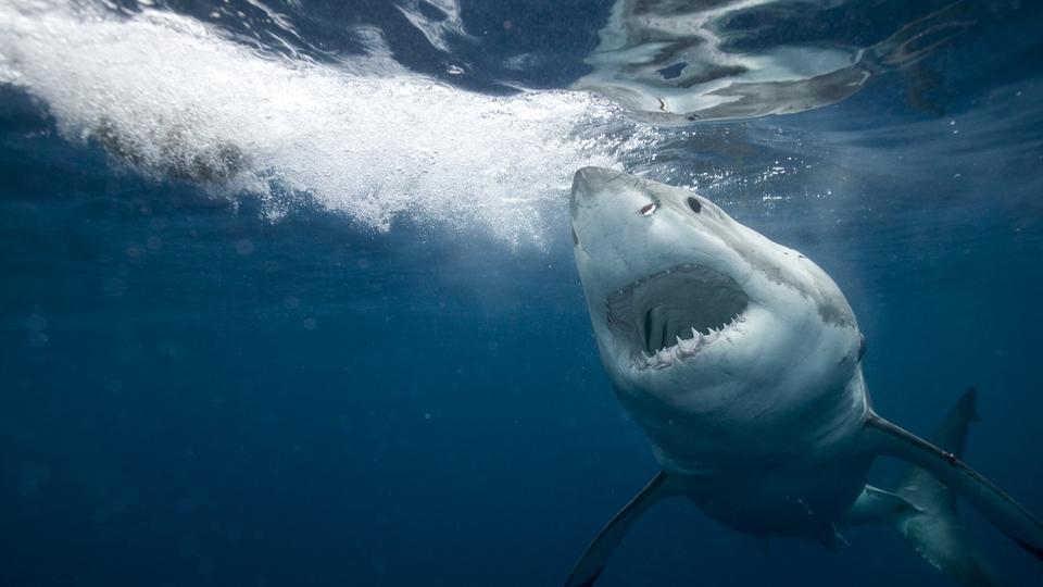 Dokument Podivní žraloci: Největší hity