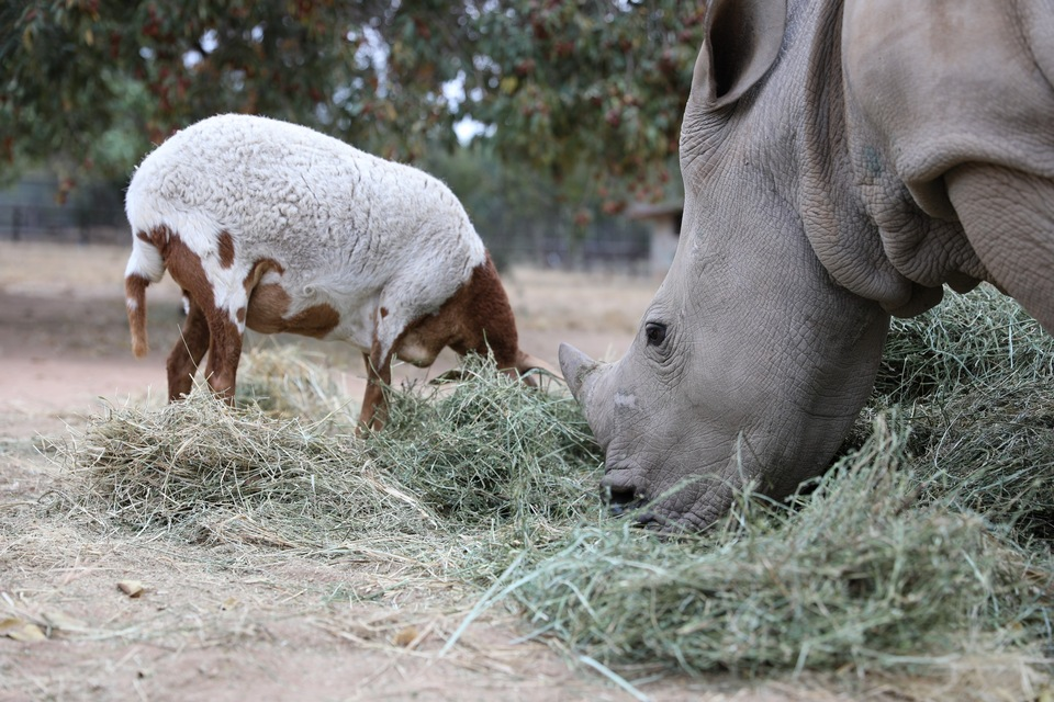 Dokument Neuvěřitelná přátelství v říši zvířat