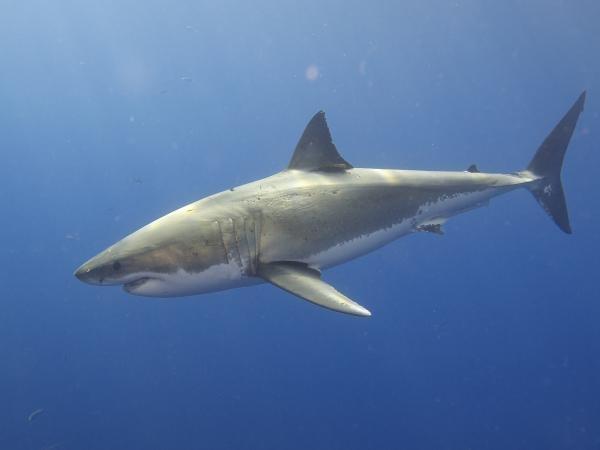 Dokument Skutečná tvář žraloků