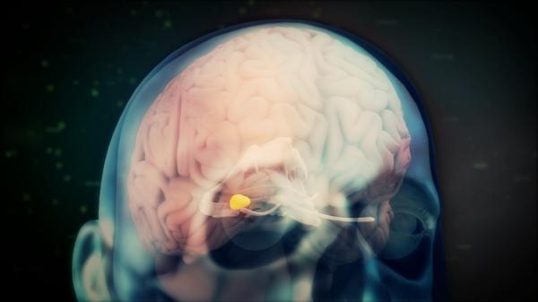 Mozek a příroda