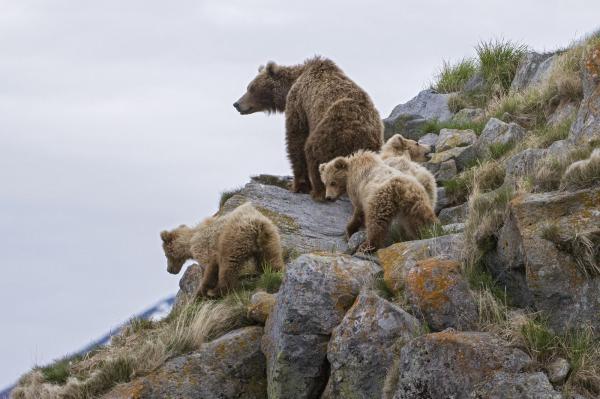 Země medvědů