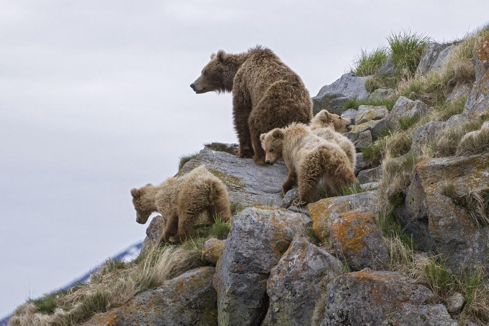 Dokument Země medvědů
