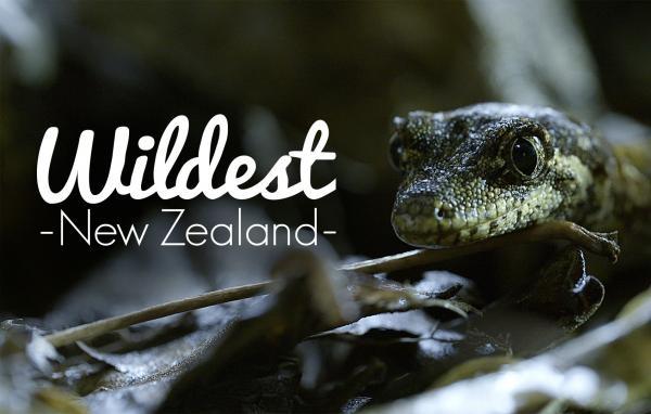 Nejdivočejší Nový Zéland