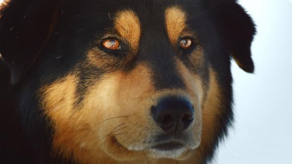 Psi - úžasná zvířecí rodina